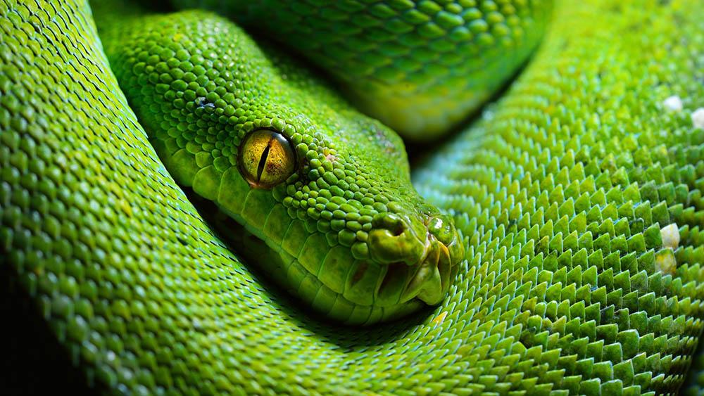 Vertabelo Academy Blog | 5 Best Python IDEs for Data Science